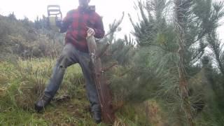 Ryobi 18v One+ Brushless chainsaw demo/review