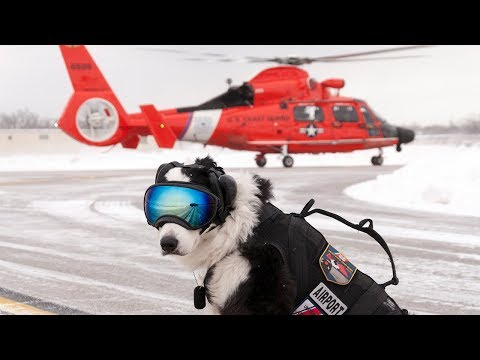 Aviation's Coolest working Dog: Tribute to K9 Piper