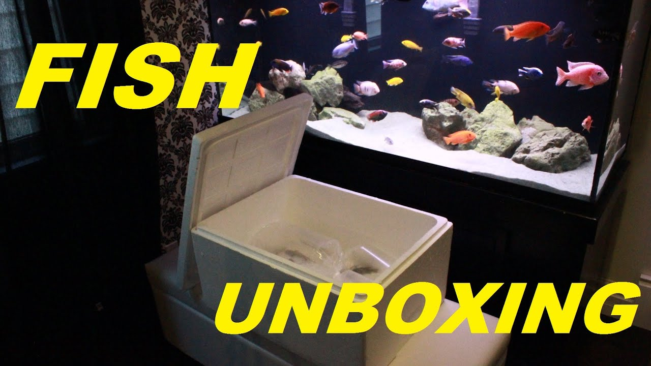 Fish for new aquarium - Fish For New Aquarium