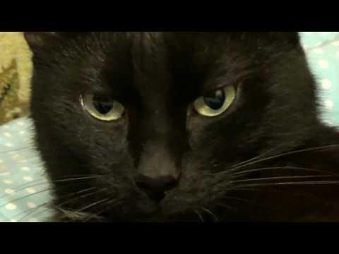 A black cat being a cat