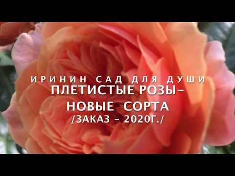 Rose // Плетистые розы новые сорта /Заказ 2020г./