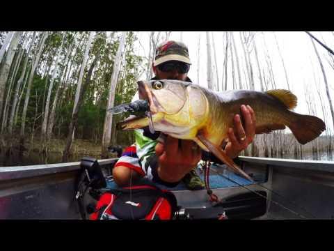Hinze Dam Saratoga Fishing Gopro edit