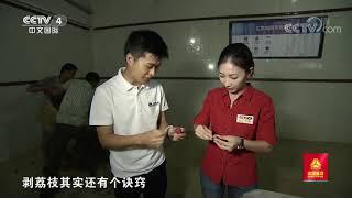 [远方的家]行走青山绿水间 博罗荔枝美名扬| CCTV中文国际 - YouTube