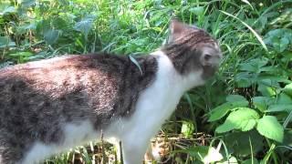 Кот кушает зеленую и сочную травку