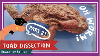 Toad Dissection (Part 2. Thoracic Cavity & Abdominal Cavity) || A Double Life [EDU]