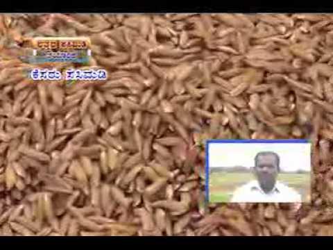 13 08 2014 Bhattada sasunadu thayarike