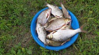 Рыбалка в Запорожье.Лывковые ямы.