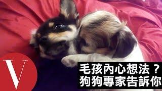 狗狗會談戀愛嗎?讓狗專家告訴你狗狗的真正想法!|Vogue Taiwan