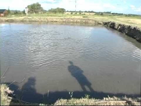 1473 12 pez campero criadero peces sebastian almara youtube for Criadero de peces en casa