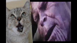 thanos vs los vengadores vs mi gato parodia