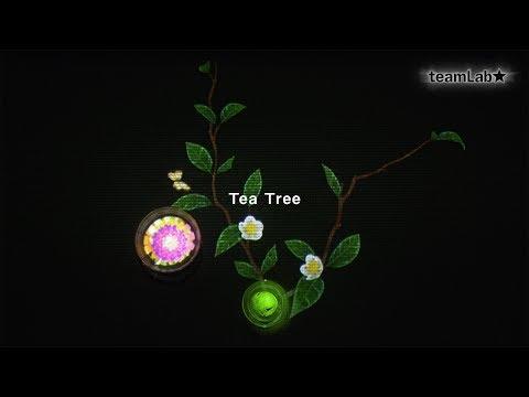 Tea Tree / 茶の木