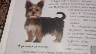 Книга о домашних животных.  Собаки (ОБЩИЕ СВЕДЕНИЯ)