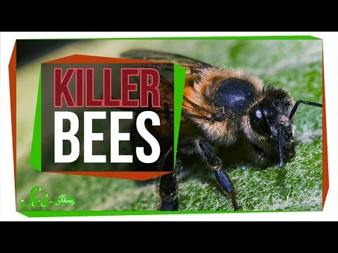 Killer Bees: The Real Zom-bee Apocalypse