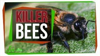 Killer Bees: The Real Zom-bee Apocalypse