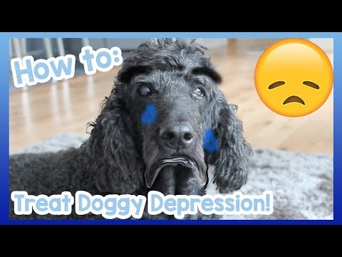how-to-treat-depression-in-dogs!-tips-and-advice-on-how-to-help-your-depressed-dog-overcome-it!-😞🐶