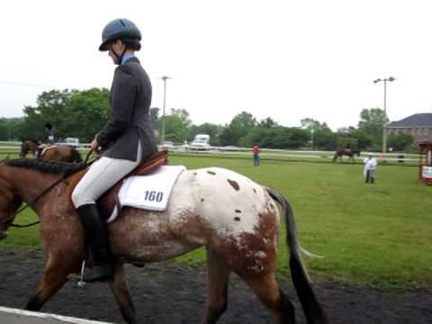 JC - Hunter Under Saddle - Right