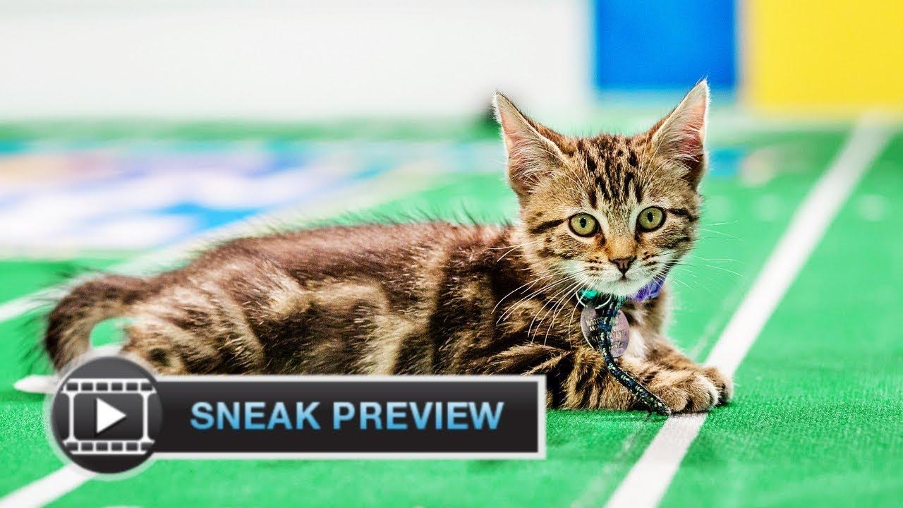 Kitten Bowl 2018 Meet Star Exclusive Sneak Peek Hallmark Channel Youtube