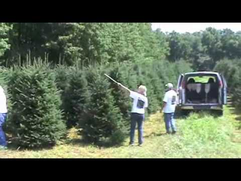 Christmas Tree Pruning at Dutchman Tree Farms - YouTube