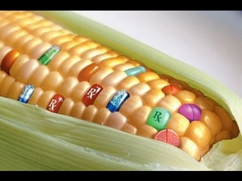 GMOs: Misconceptions and Concerns