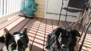 Loki & Corra's Pissmas - Peanut Butter Bacon Cookies!