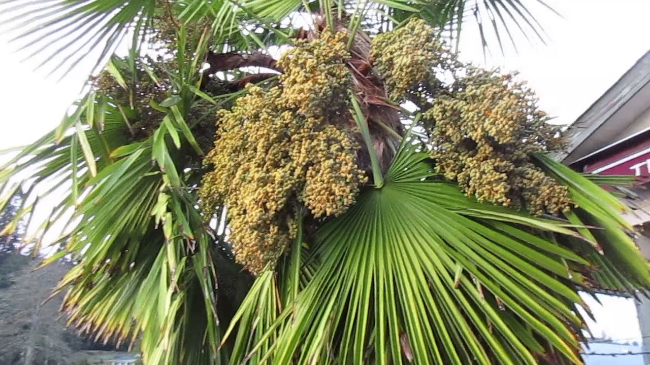 What do palm tree seeds look like 9