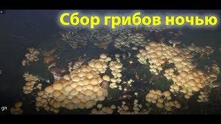 Самые большие грибы появляются ночью!!!