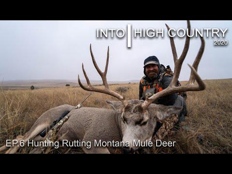Hunting Rutting Montana
