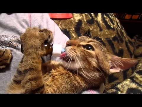more catnip!!! (Кот с похмелья)