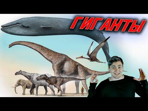 Гиганты: Пределы размеров, Анатомия, Самый большой организм на планете.