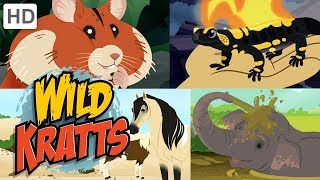 Wild Kratts 🐘🐹 New Creature Adventures! (Part 2) 🐎🦎 | Kids Videos