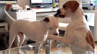 Best  dog buddies