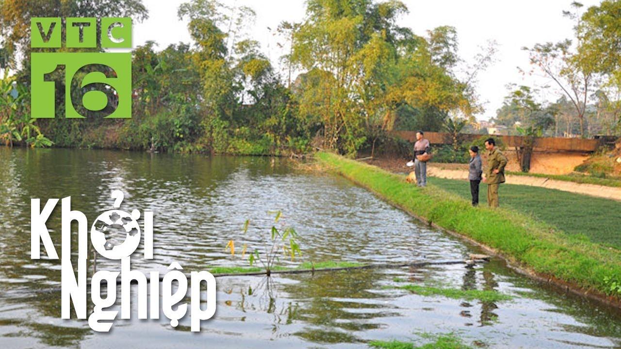 Tự ủ thức ăn cho cá, chuyên gia khen hết lời | VTC16