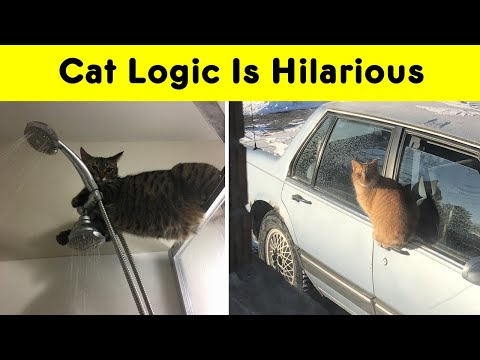 Funny Cats That Have Their Own Logic