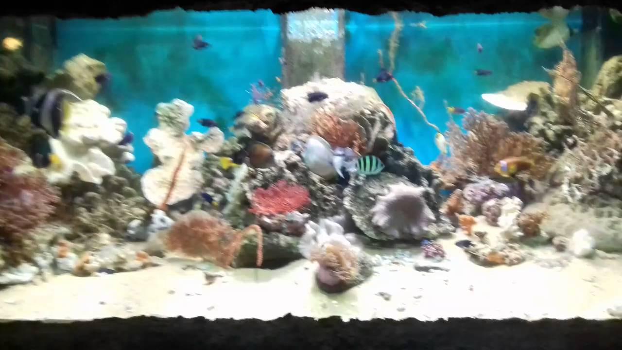 Fish aquarium in sri lanka - Colorful Fish Dehiwala Zoo Sri Lanka