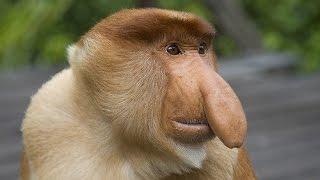 10 редких животных и 10 необычных обезьян