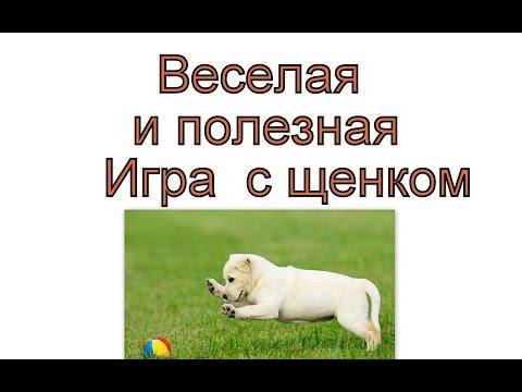 Дрессировка щенка  - Интересная игра  для щенка