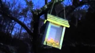 How To Make A Squirrel Feeder Out Of A Bird Feeder