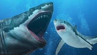 Será Que O Grande Tubarão-Branco É Descendente do Megalodonte?