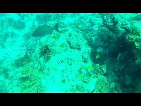 Scuba Dive in Stuart Florida with GoPro Hero 2