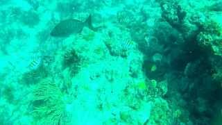 Scuba Dive in Stuart Florida with GoPro Hero 2