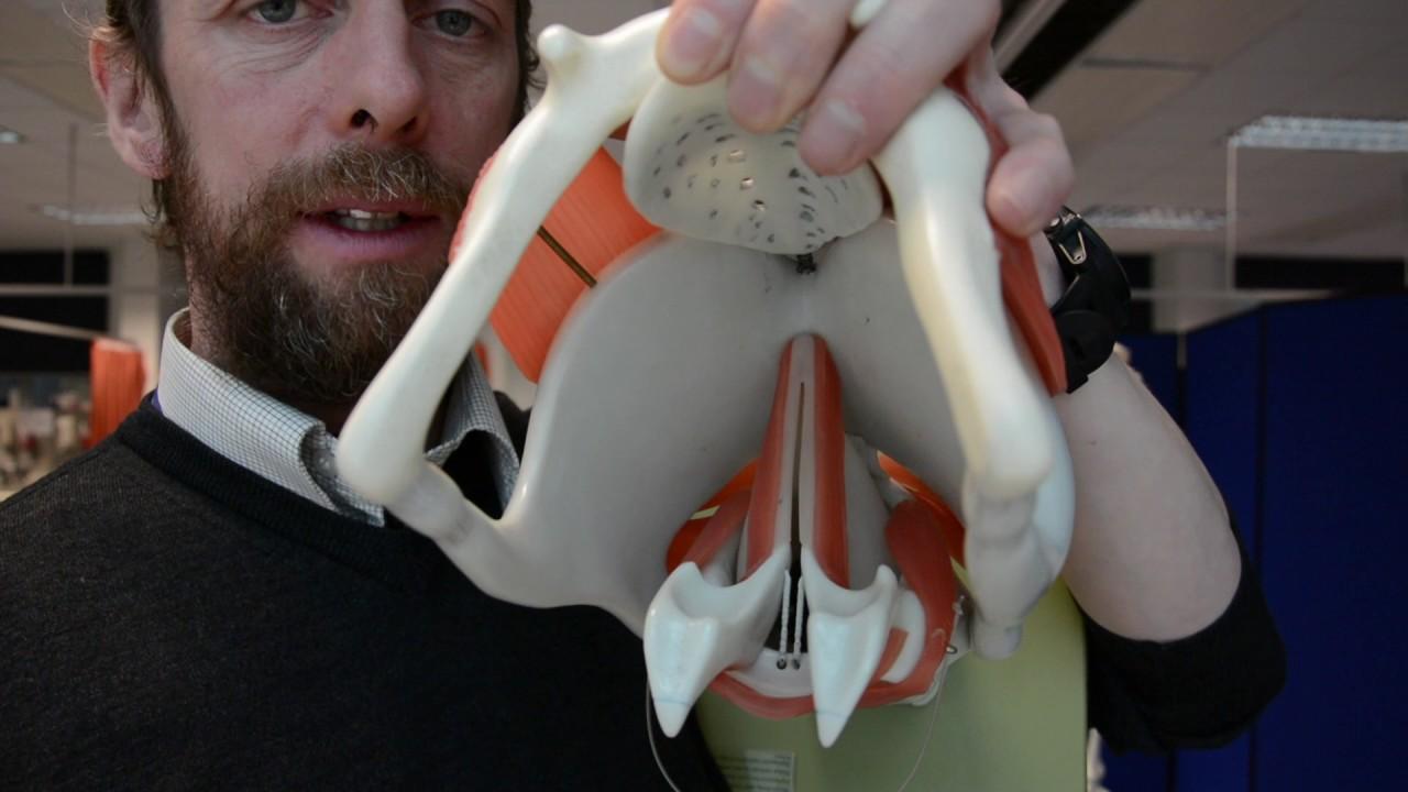 Larynx Anatomy Youtube