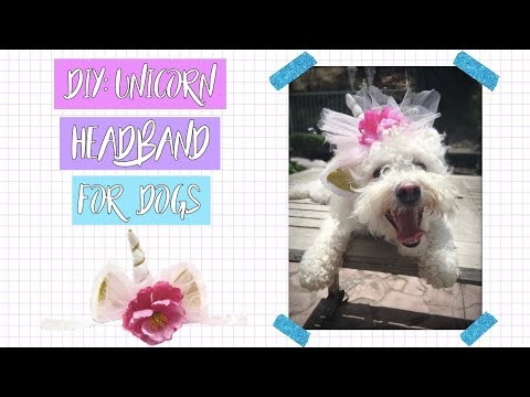 DIY UNICORN HEADBAND for your DOG!  d6d32d4afe7