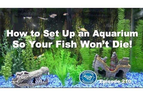 Set Up Your Aquarium So Your Fish Won't Die! | Episode 210