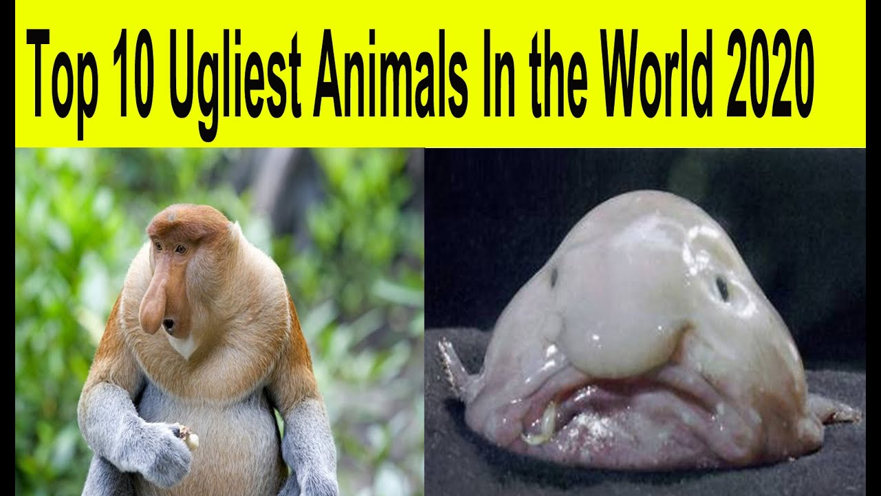 Top 10 bad face ugliest animals in the world 2020 - YouTube