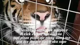 Download lagu story wa kidung wahyu kolosebo MP3