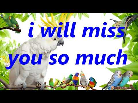 """""""I Will Miss You So Much"""" Teach your bird to say record parrot budgie talking training"""
