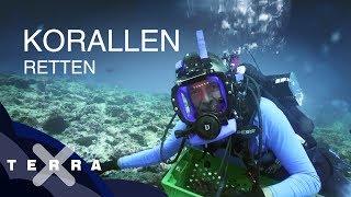 Bedrohung der Korallenriffe | Dirk Steffens auf den Seychellen