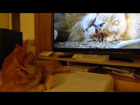 Baby Cats - Cute and Funny Cat Videos Compilation , Cat Orinoco