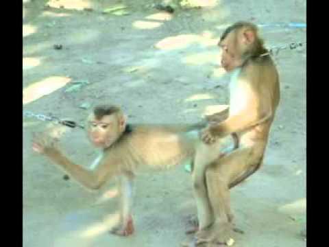 Los animales depravados