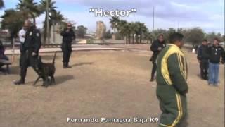 Sit Means Sit Police Dog Baja K9 Mexico Seminar